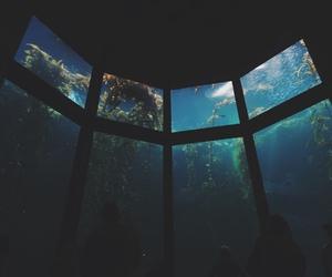 water, sea, and fish image