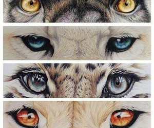 eyes, animal, and drawing image