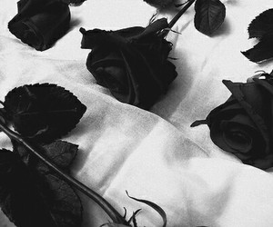 rose, black and white, and black image
