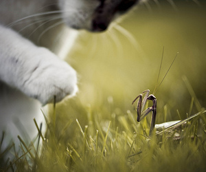cat, animal, and grass image
