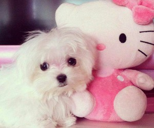 love, dog, and hello kitty image