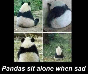 panda, sad, and alone image