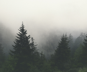 forest, vintage, and indie image