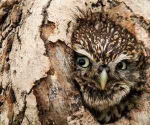 owl, nature, and tree image