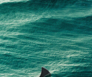 shark, sea, and blue image