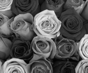 black, roses, and tumblr image