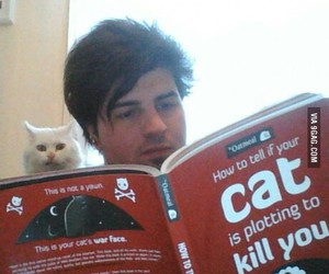funny, cat, and book image