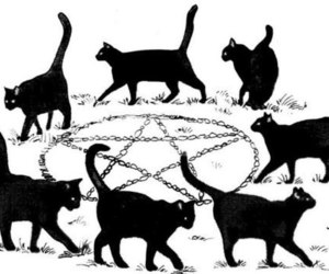 cat, pentagram, and witch image