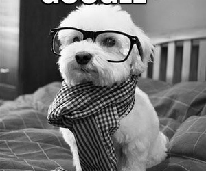 dog, hipster, and cute image