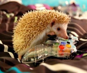 cute, animal, and xbox image