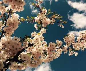 bloom, blossom, and nature image