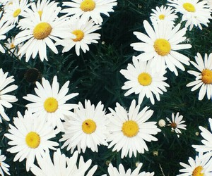 amazing, cool, and daisy image