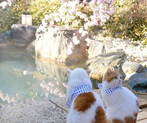 animals, cats, and japan image