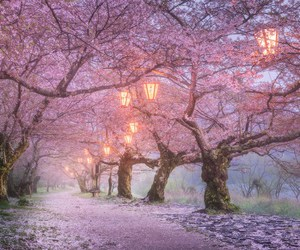lamps and pink tree image