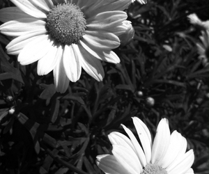 black, white, and flowers image