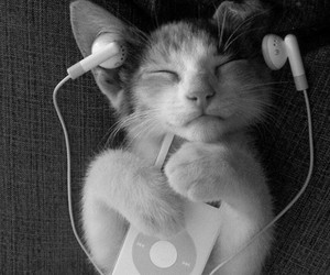 cat, happy, and music image