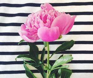 flowers, pink, and stripes image