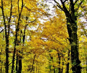 fall, forest, and gold image