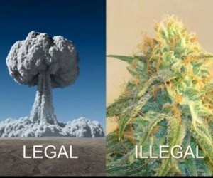 weed, legal, and illegal image