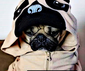 cute, pug, and pug life image