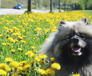 beautiful, dog, and flower image