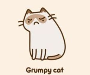 grumpy cat, cat, and pusheen image