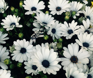 beautiful, blue, and daisies image