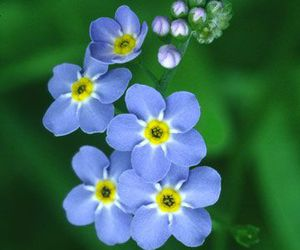 blue, nature, and flowers image