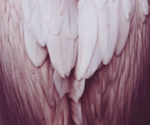 beautiful, feathers, and pink image