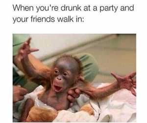 drunk, funny, and monkey image