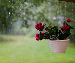 flowers, rain, and garden image