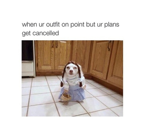 funny, dog, and outfit image