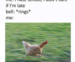 funny, school, and Chicken image