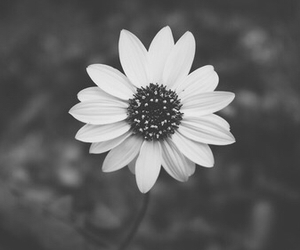 flower and black image