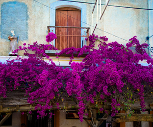 flowers, mexico, and purple image