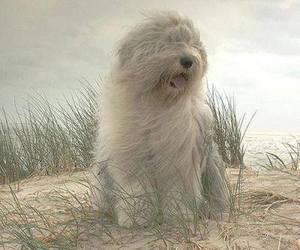 dog and beach image