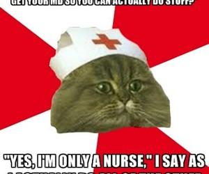 nurse and nursing student cat image