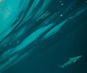 amazing, shark, and animal image