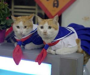 cat, japan, and kawaii image