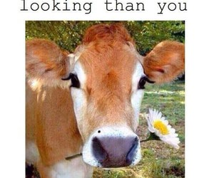 cow, life, and lol image