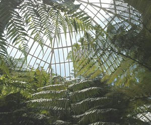 greenhouse, grunge, and tropical image