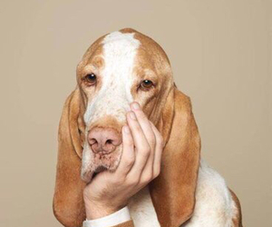 dog, funny, and hand image