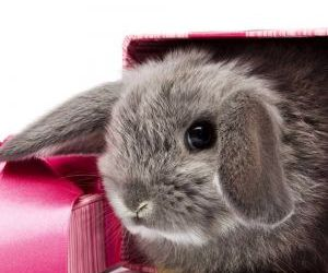 baby animals, bunnies, and bunny image