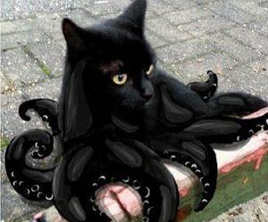 black, cat, and snapchat image