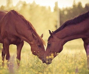 free, happiness, and horses image
