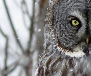 animal, eyes, and invierno image