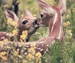 animal, kiss, and deer image