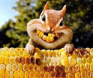corn, squirrel, and animal image