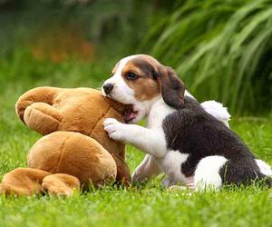 beagle, playing, and cute image