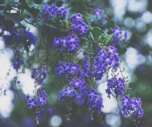 amazing, nature, and blue image